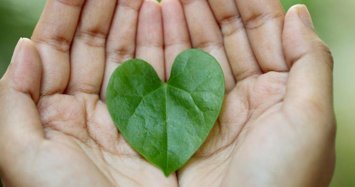 ways to go green _ mercy health