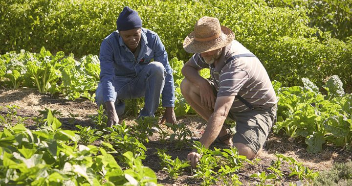 two men planting in a garden _ best crops to grow in ohio and kentucky