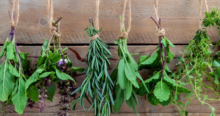 herbs hanging from string _ natural herbs and their benefits