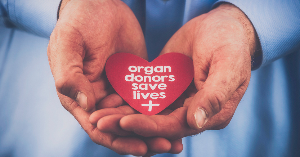 "A doctor's hands hold a red heart that says ""organ donors save lives"""