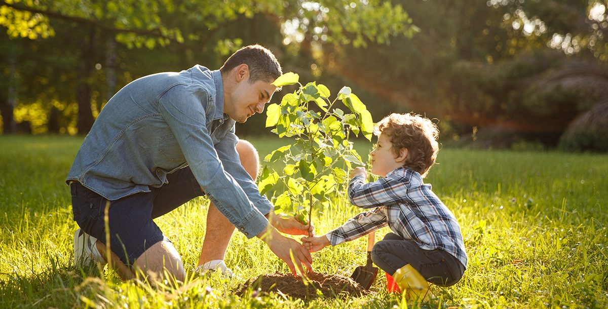 Father planting a tree in the yard with his son for Earth Day.